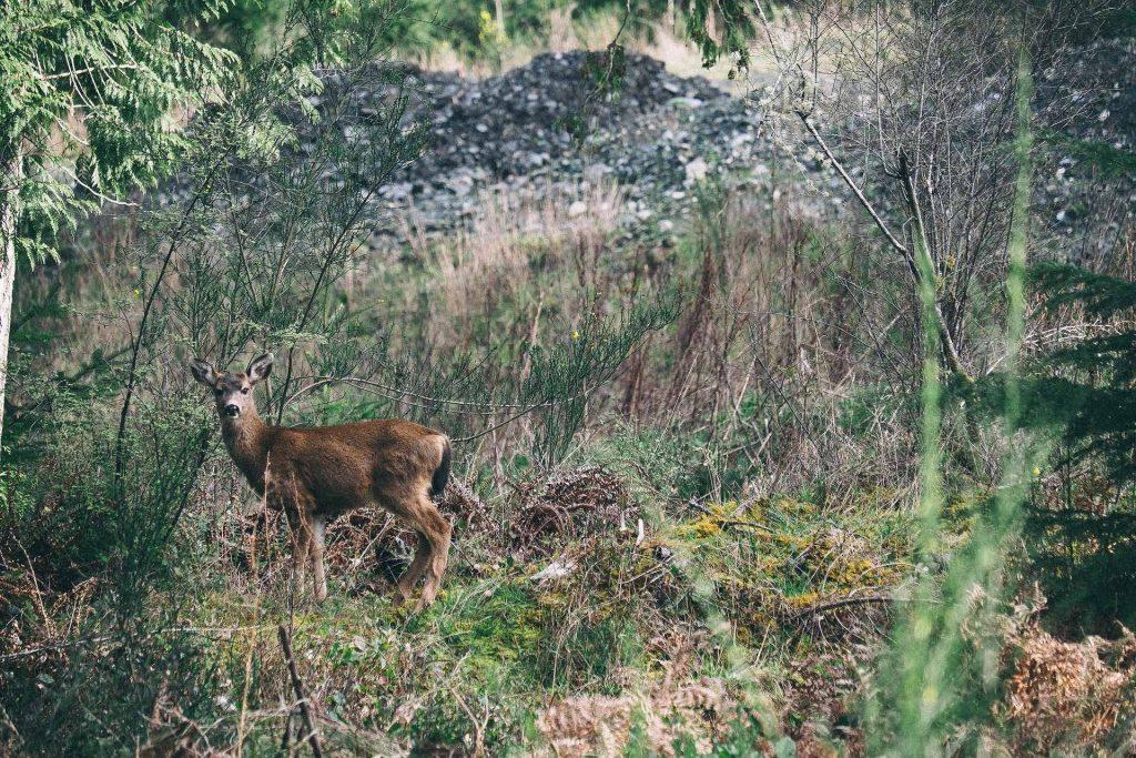 """""""Ich sehe eine Jagd, ein gehetztes Tier. Und ich spüre tief in mir: Genauso leben wir.""""     Foto: Pixabay"""